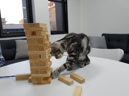 Pancho the office junior cat) playing with jenga